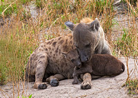 Hyena Mom with Pup